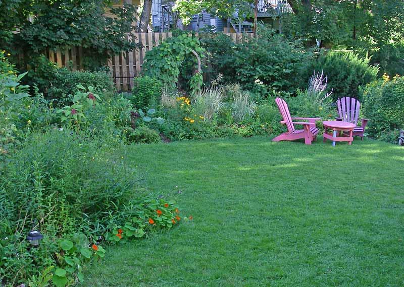 Establishing White Clover In Lawns