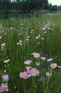 Coastal Plain Flora