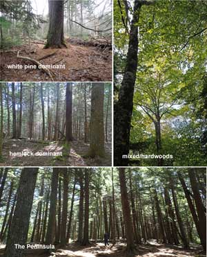 old forest sites
